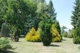 forestry_priroda_14.jpg