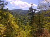 forestry_priroda_5.jpg