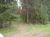 forestry_priroda_7.jpg
