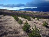 forestry_priroda_8.jpg